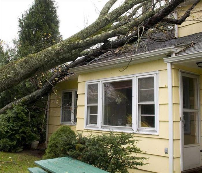 Storm Damage Tips for Preventing Wind Damage